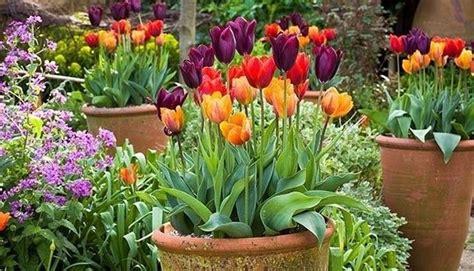 fiori terrazzo fiori da terrazzo piante da terrazzo come scegliere i