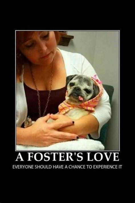 indiana pug rescue 40 best images about pug rescue on giving up adoption and milwaukee