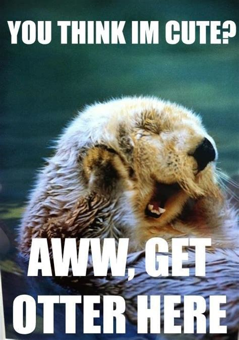 Awww Meme - awww get the otter here