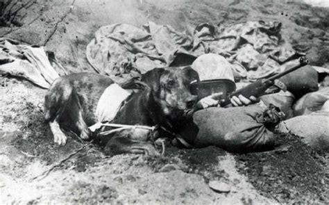 imagenes fuertes segunda guerra mundial perros paracaidistas de la segunda guerra mundial veoverde