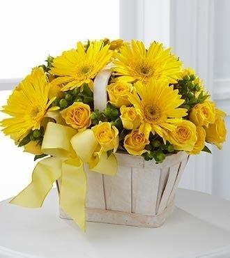 significato fiori gerbera significato fiori gerbere bianche 1 fiore significato