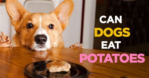 are potatoes bad for dogs can dogs eat potatoes mccnsulting web fc2