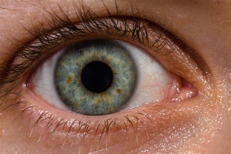 printable brown eyes file human eye with blood vessels jpg wikimedia commons