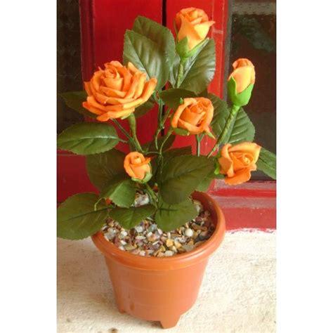 Biji Bunga Mawar Brown White benih mawar orange orange