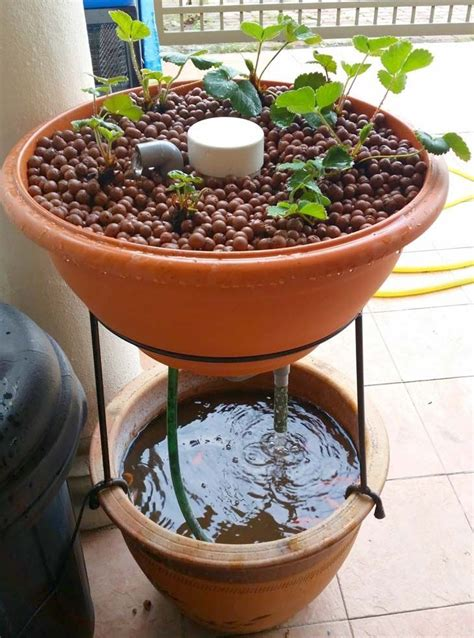 awesome diy aquaponic builds  inspire  indoor