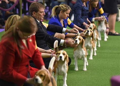 what channel is the westminster show on where to the westminster show tv
