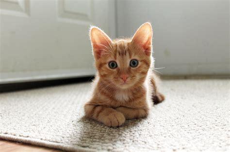 street cat rescue street cat rescue