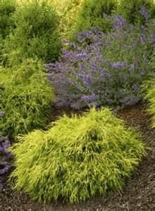 Evergreen shrubs arrowhead enterprises