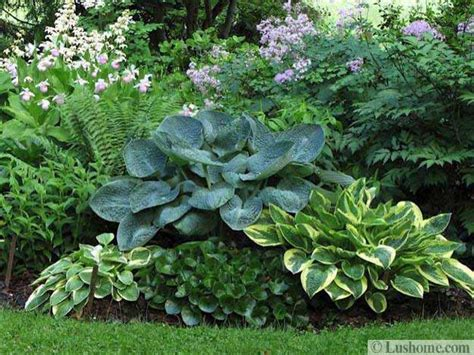 Landscape Design With Hostas 21 Ideas For Beautiful Garden Design And Yard Landscaping