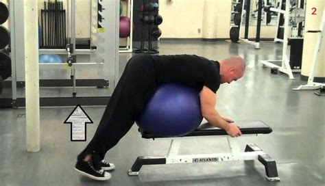 back extensions without bench reverse back extension reverse hyper bodybuilding wizard