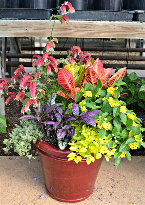Gardening Club Ideas Garden Club Ideas In Senior Center Living Photograph Garde