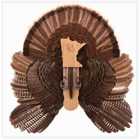 cedar turkey fan mount kit turkey fan display turkey