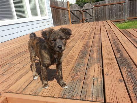puppy rescue oregon photos for oregon rescue yelp