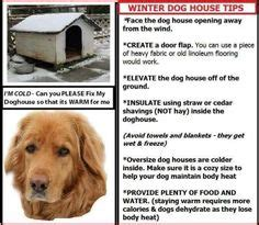 can golden retrievers live outside winter season tips on safety tips pets and winter