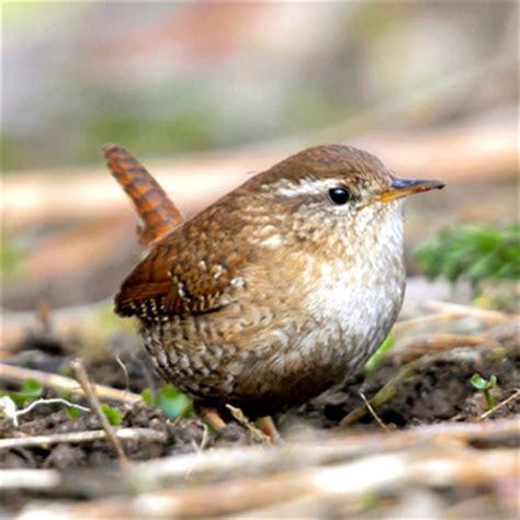 vögel im garten bestimmen vogelfreundlicher garten vogel und naturschutzprodukte