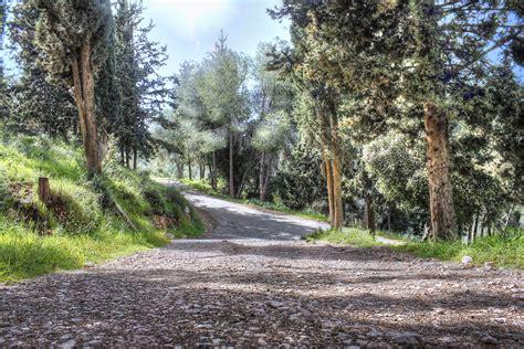 Free Ways To Search For Fotos Gratis Paisaje 225 Rbol Naturaleza Bosque Camino Al Aire Libre Rama