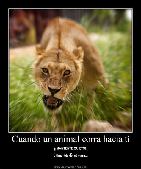 imagenes tiernas de amor con animales imagenes de animales con frases de amor