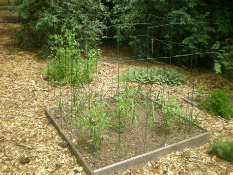 tips for keeping animals out of your vegetable garden