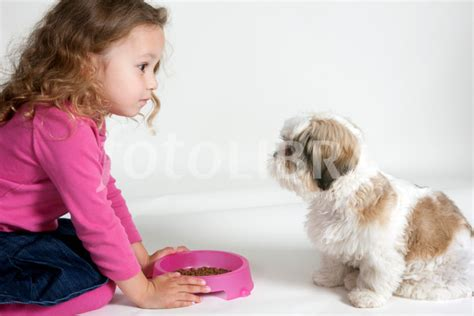 what to feed a shih tzu feeding shih tzu puppy