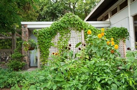 grigliati per giardino grigliati in legno grigliati per giardino tipi di
