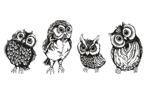 owl tattoo png drawing art cute birds owls transparent cute owls owl
