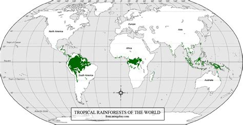 rainforest map rainforest conservation challenges of addressing deforestation issues