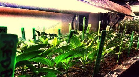 lada per piante indoor apollo grow led per la coltivazione indoor e idroponica
