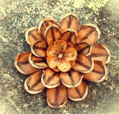 Pine Cone Home Decor by Decorations 1000 Images About Pinecone Crafts On