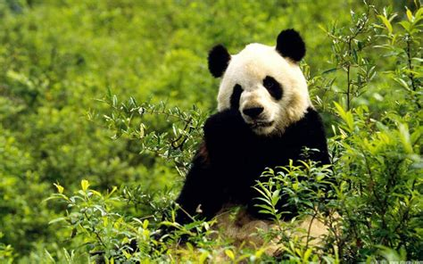 la fauna pictures la importancia de la fauna y la flora para el ser humano