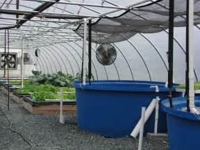Backyard Aquaponics Greenhouse by Aquaponics Greenhouse Plans