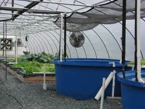 Backyard Growing System Aquaponics Greenhouse Plans