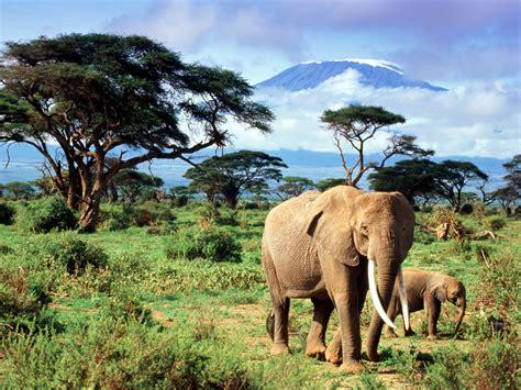 syari eleghant selebrity indian elephant page 2