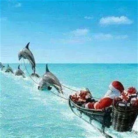 images of christmas in florida florida christmas greetings