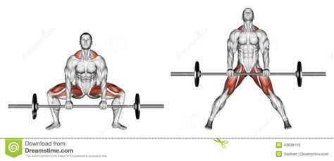 Machine Bench Press Vs Bench Press Exercising Deadlifts Sumo Stock Illustration Image