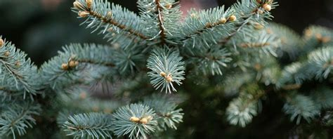illinois christmas tree association search our members