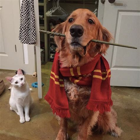 harry s dogs harry potter costume the worlds harry potter wallpaper beds and costumes