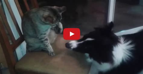 cat vs fight cats vs dogs the ultimate fight battle we cats and kittens