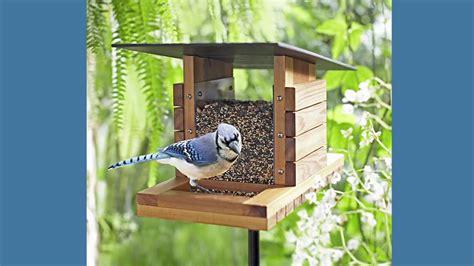 bird in everything birdhouse feeder plans