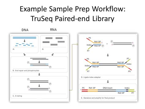 illumina sequencing workflow illumina rna seq workflow 28 images illumina rna seq