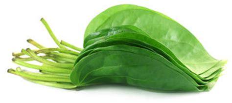 imagenes de hojas verdes comestibles hoja comestible del betel foto de archivo imagen 27133850