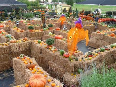 fall festival decorations 25 best ideas about fall festivals on fall