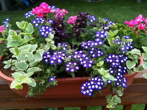 Flowers For Balcony Planters by 25 Best Ideas About Railing Planters On