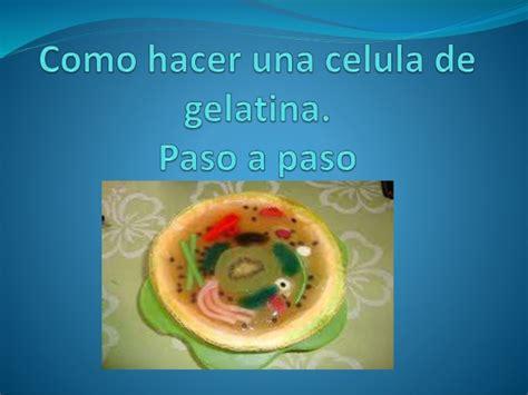 como hacer una celula con dulces como hacer una celula de gelatina