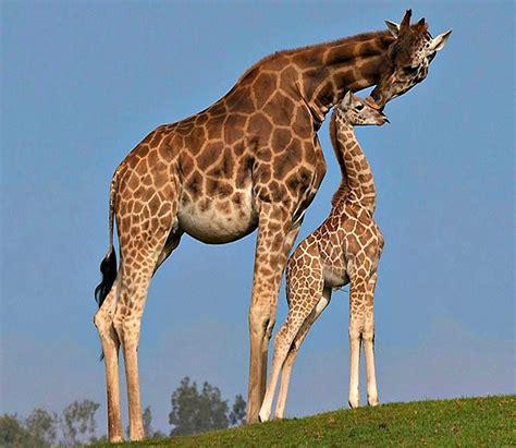 fotos animales lindos animales bonitos taringa