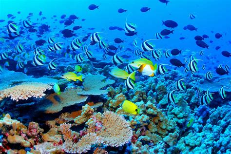 the the great barrier reef of australia its products and potentialities containing an account with copious coloured and photographic illustrations and coral reefs pearl and pearl shell bãªch books great barrier reef australia tourist destinations