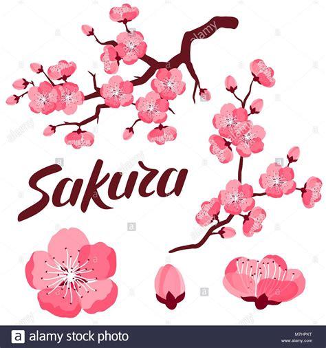un insieme di fiori immagini di fiori stilizzati