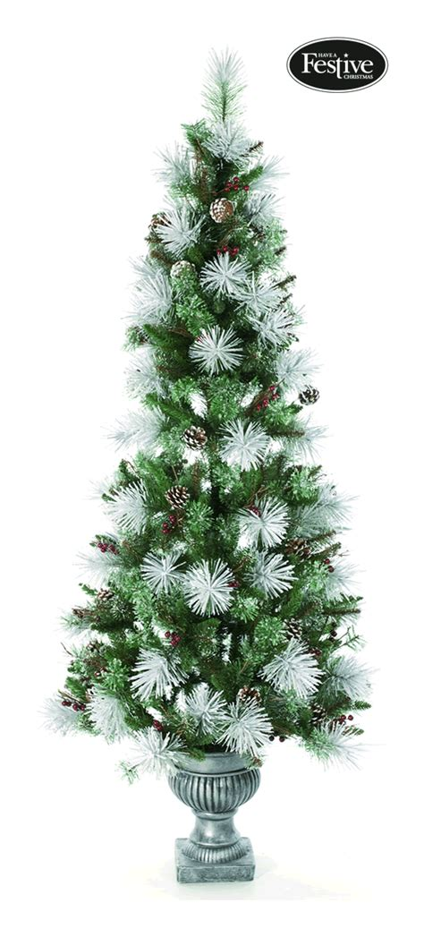 frosted bristle pine potted 6ft christmas tree 163 71 24