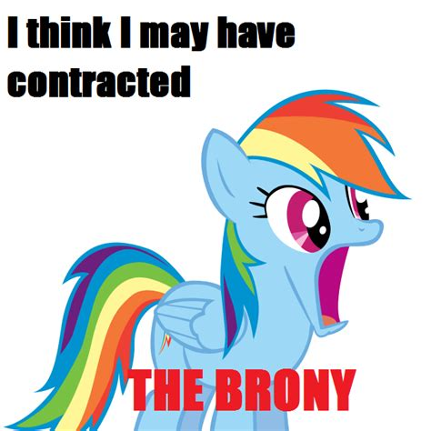 Know Your Meme Brony - brony contraction my little pony friendship is magic