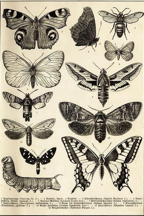 Kleine Schmetterlinge 5533 by Kleine Schmetterlinge Schmetterling