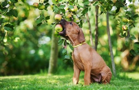 dogs and apples pawculture